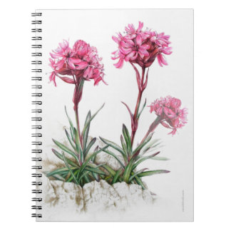 Alpine catchfly watercolor fine art notebook