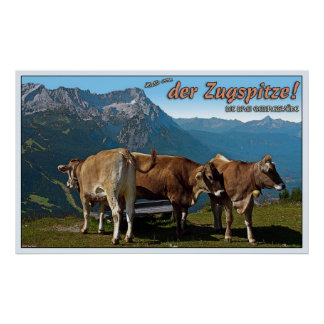 Alpine Cows and the Zugspitze Poster