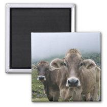 Alpine cows magnet
