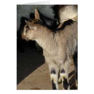 Alpine Dairy Goat Kids Card