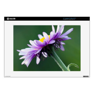 Alpine Daisy Decals For Laptops