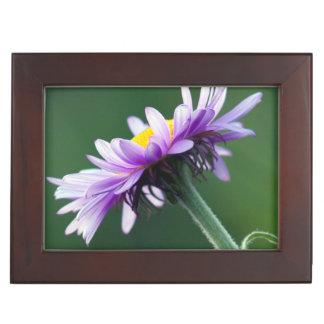Alpine Daisy Memory Box