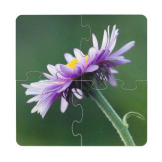 Alpine Daisy Puzzle Coaster