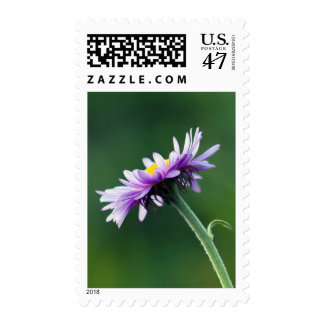 Alpine Daisy Stamp