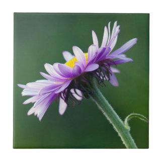 Alpine Daisy Tile