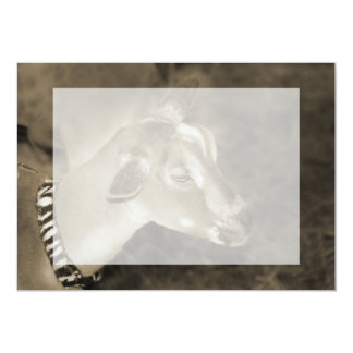 Alpine doe sepia shaved baby goat striped face card