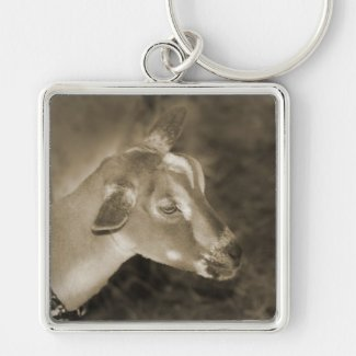 Alpine doe sepia shaved baby goat striped face keychains