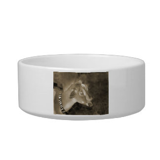 Alpine doe sepia shaved baby goat striped face pet water bowls