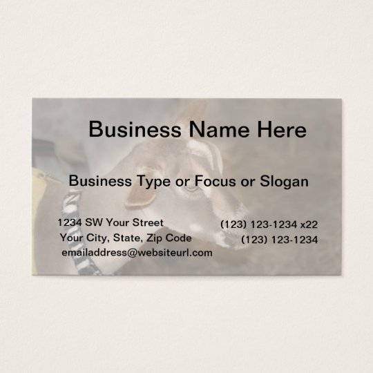 Alpine doe shaved baby goat striped face business card