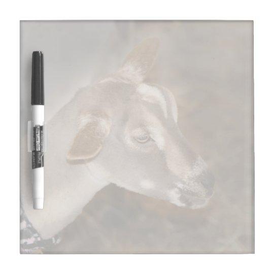 Alpine doe shaved baby goat striped face dry erase board