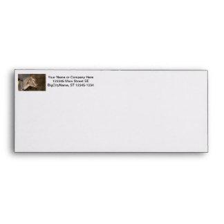 Alpine doe shaved baby goat striped face envelopes