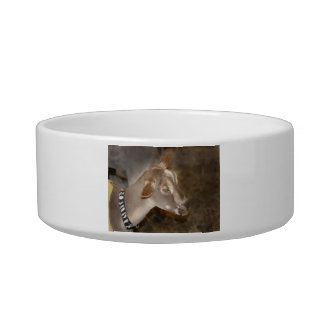 Alpine doe shaved baby goat striped face cat water bowls