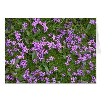 Alpine Flowers Card