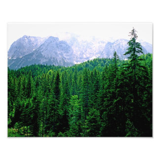 Alpine Forest Photo Print