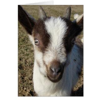 Alpine Goat Kid Card