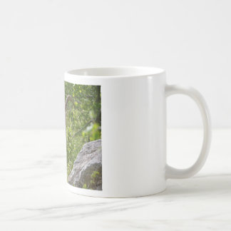Alpine ibex eating leaves coffee mug