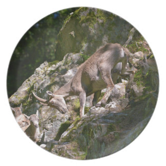 Alpine ibex in the mountain plate