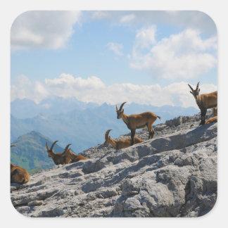 Alpine Ibex Wild Mountain Goats Sticker