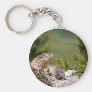 Alpine marmot and its young keychain
