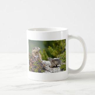 Alpine marmot and its young mug