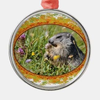 Alpine marmot eating flower in frame of leaves metal ornament