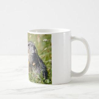 Alpine marmot eating flower mug