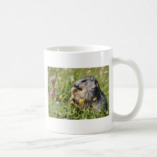 Alpine marmot eating flower coffee mugs
