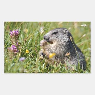 Alpine marmot eating flower rectangular sticker