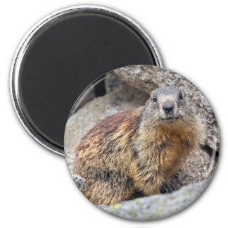 Alpine Marmot Magnet