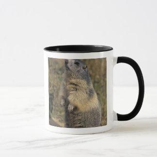 Alpine Marmot, Marmota marmota, adult standing Mug