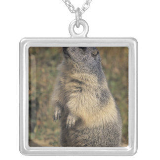 Alpine Marmot, Marmota marmota, adult standing Square Pendant Necklace