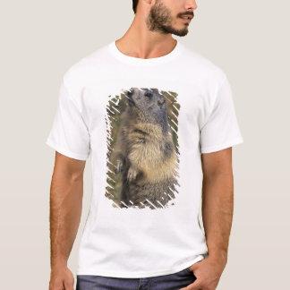 Alpine Marmot, Marmota marmota, adult standing T-Shirt