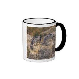 Alpine Marmot, Marmota marmota, adults, Saas Coffee Mugs