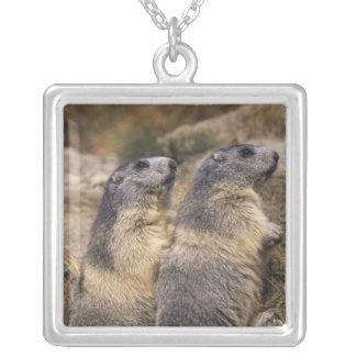 Alpine Marmot, Marmota marmota, adults, Saas Silver Plated Necklace