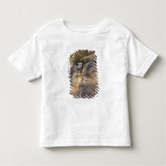 Alpine Marmot, Marmota marmota, adults, Saas T Shirt