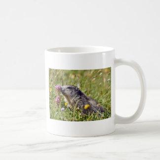 Alpine marmot near flower coffee mug