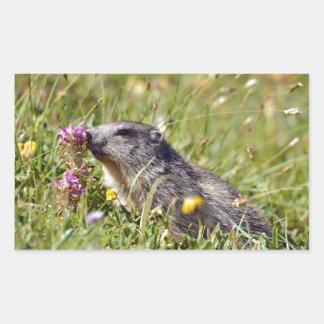 Alpine marmot near flower rectangular sticker