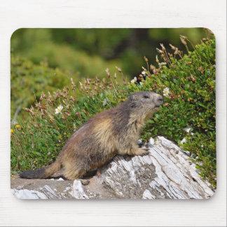 Alpine marmot on rock mouse pad