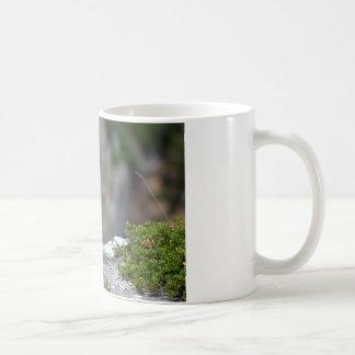 Alpine marmot on rock coffee mugs