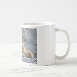 Alpine marmot on the roch coffee mug