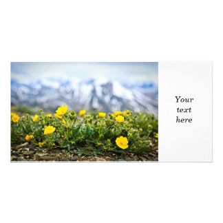 Alpine meadow in Jasper National Park Custom Photo Card
