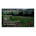 Alpine meadow in the Pasayten Wilderness, Californ Double-Sided Standard Business Cards (Pack Of 100)