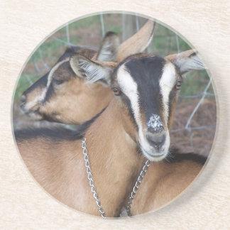Alpine Oberhasli goat cross young does kids Coaster