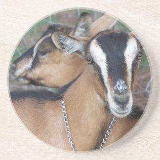 Alpine Oberhasli goat cross young does kids Drink Coaster