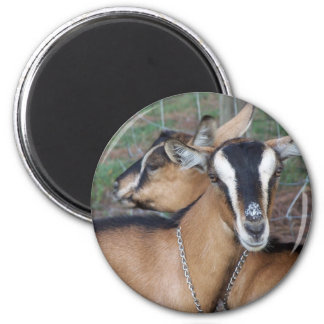Alpine Oberhasli goat cross young does kids Magnet