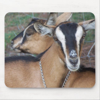 Alpine Oberhasli goat cross young does kids Mouse Pad