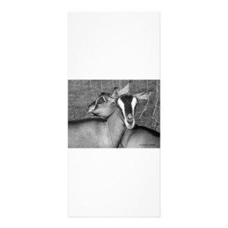 Alpine/Oberhasli goat does sisters photograph bw Rack Card