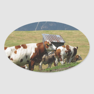 Alpine pasture with cows oval sticker