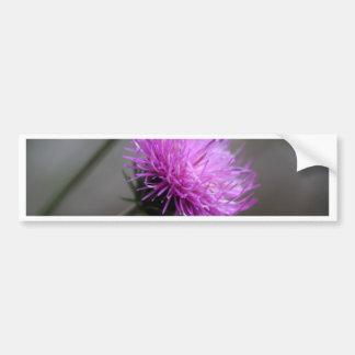 alpine thistle (Carduus defloratus) Bumper Sticker