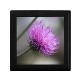 alpine thistle (Carduus defloratus) Jewelry Box